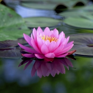 lotus-flower Female Teacher Placeholder Image