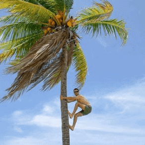Tad-asana Palm Tree Pose